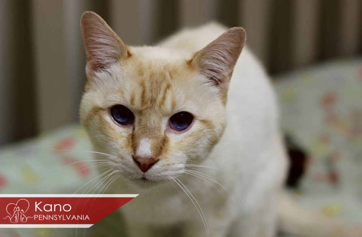 Featured Pets of the Week – March 14, 2017