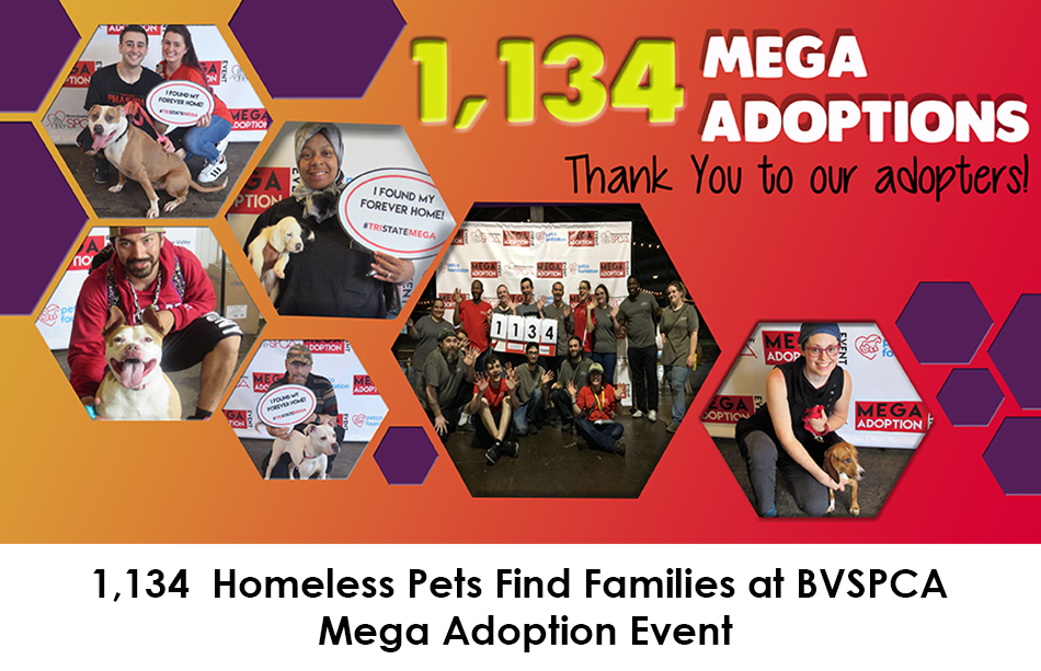 postmegaadoption_blogimage_-final