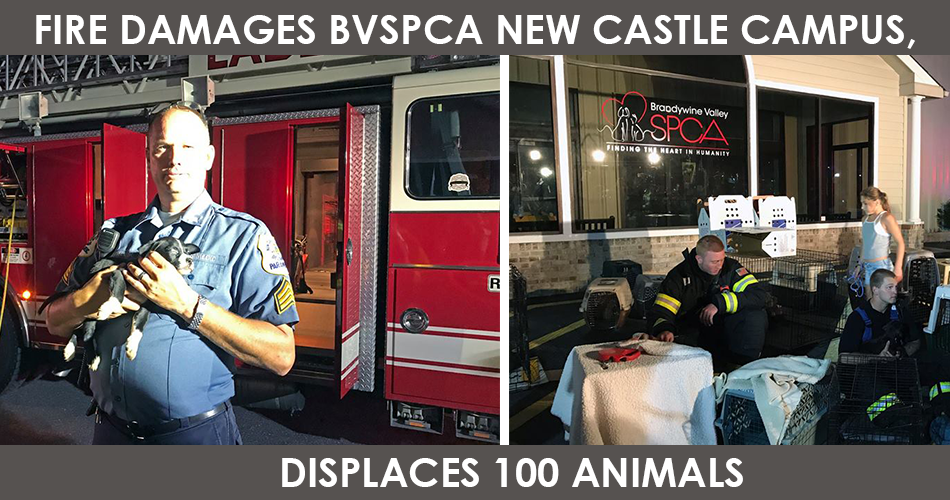 Fire Damages BVSPCA New Castle Campus, Displaces 100 Animals