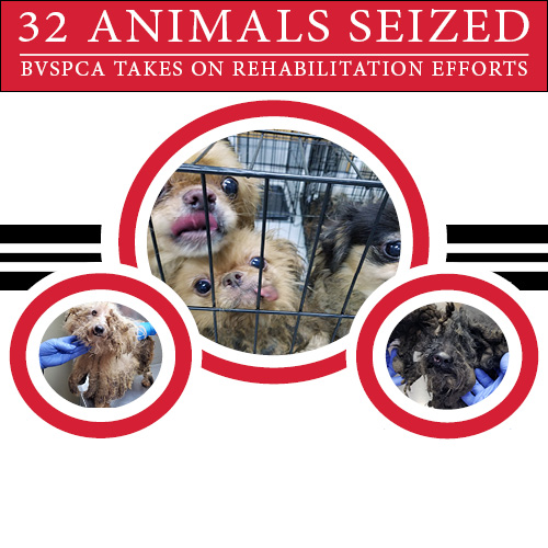 32 Animals Seized in Seaford, Delaware