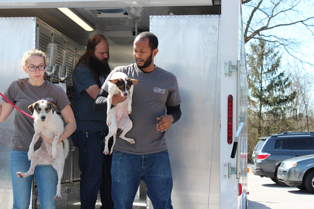 Brandywine Valley SPCA Saves 56 Animals from Puerto Rico as Part of National Rescue Effort