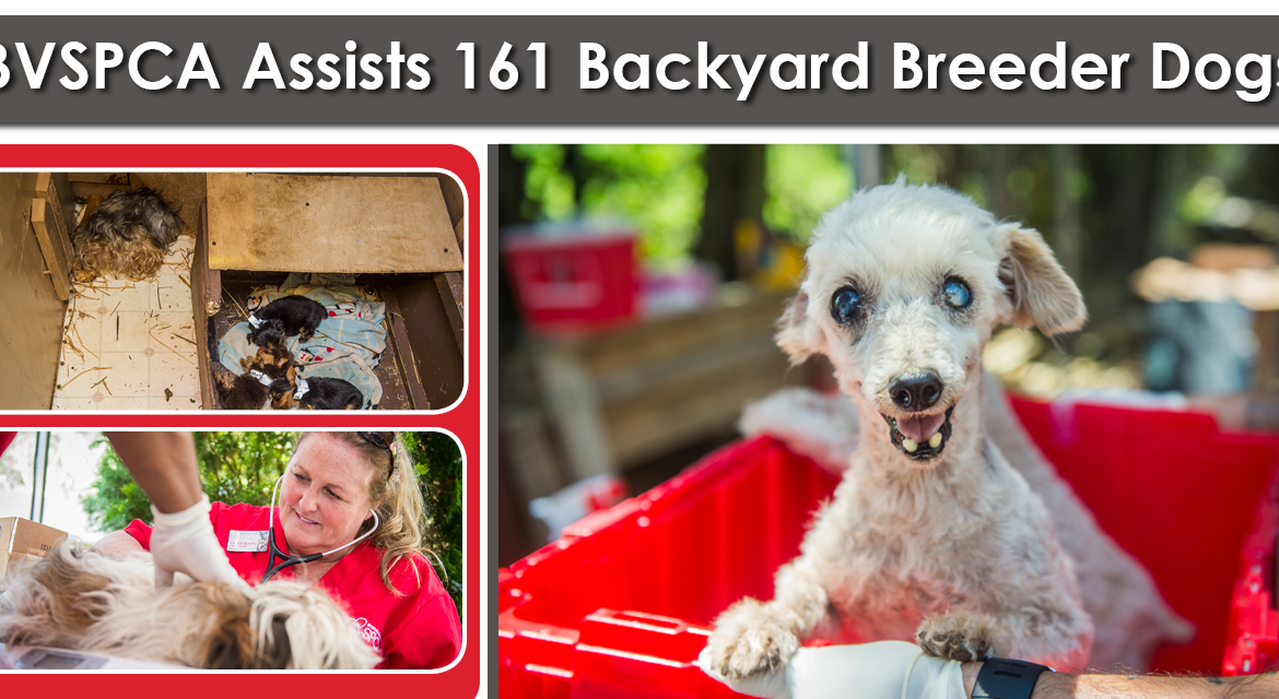 BVSPCA Assists 161 Backyard Breeder Dogs