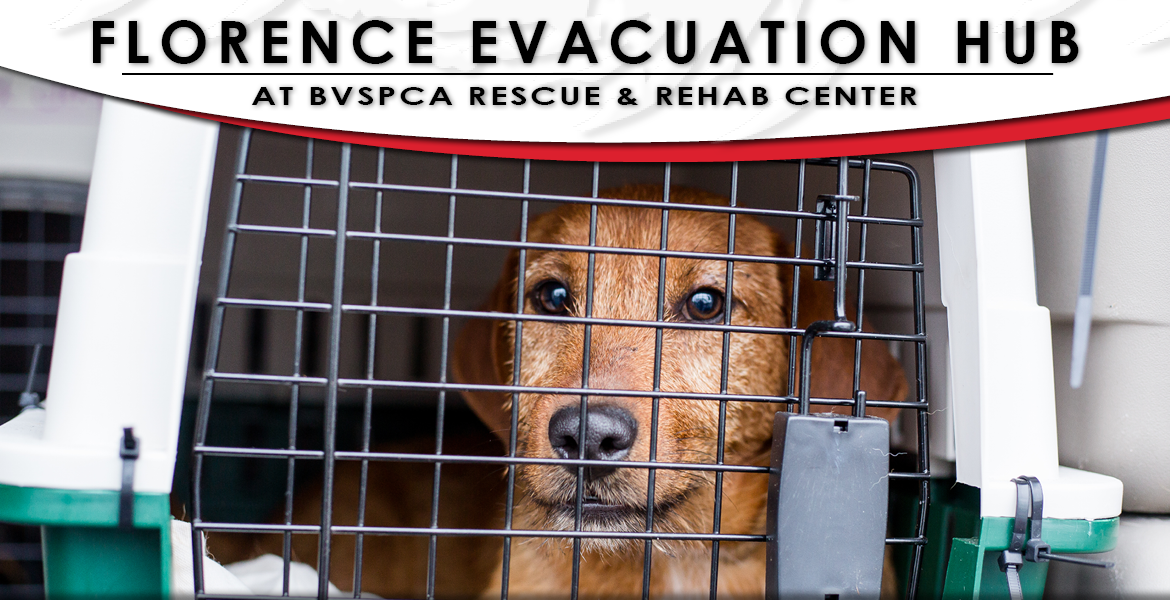 Florence Evacuation Hub at BVSPCA Rescue & Rehab Center