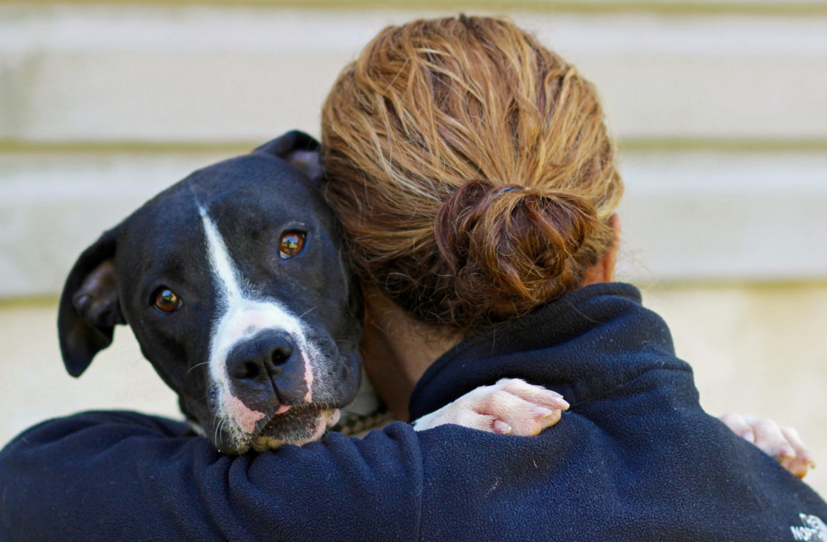 Housing for Domestic Violence Victims' Pets