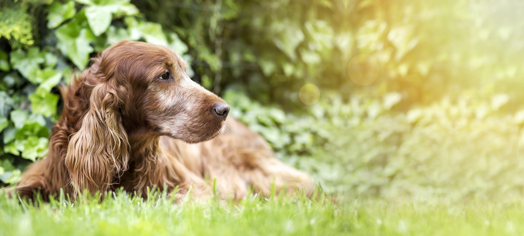 3 Tips for Caring for Your Senior Pet