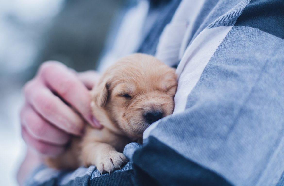 When to Take Your Pet to the Veterinarian