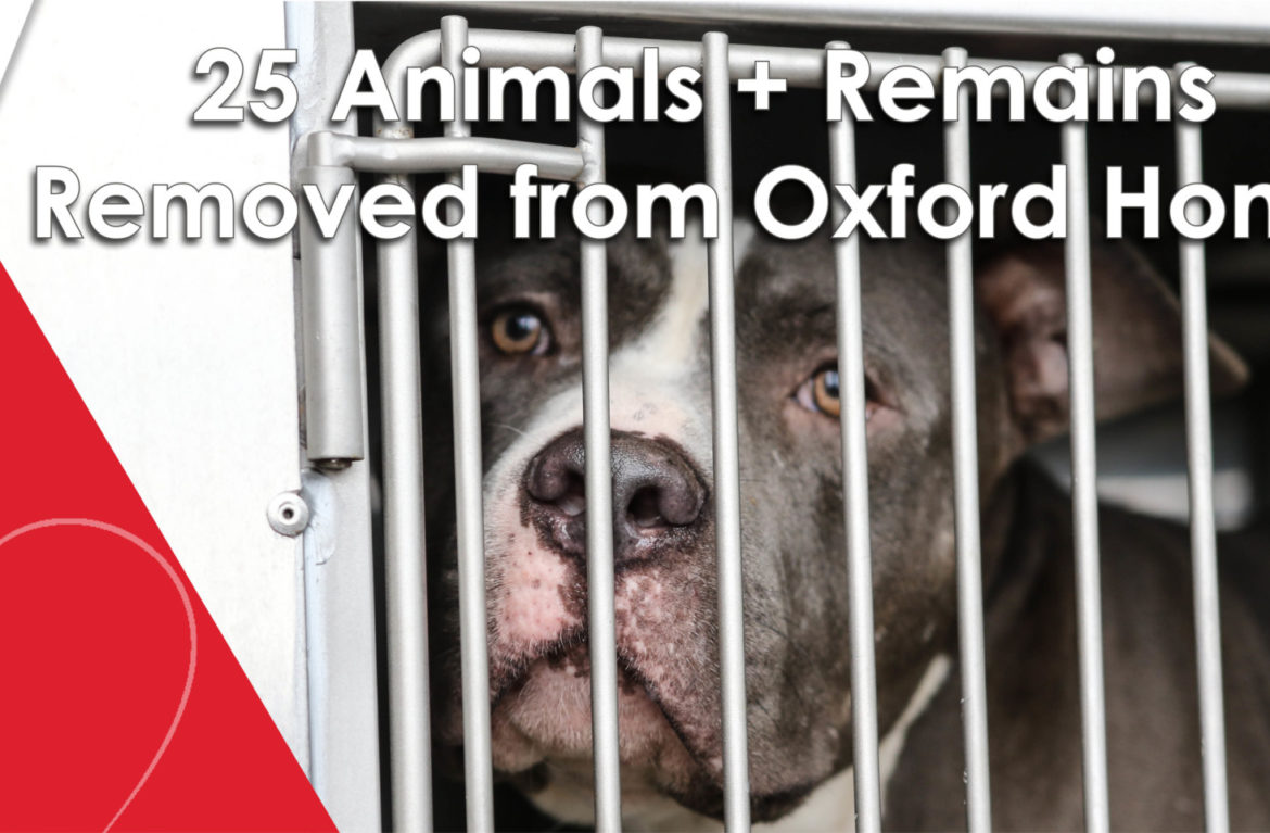 25 Animals + Remains Seized in Oxford