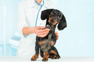 spay and neuter cost