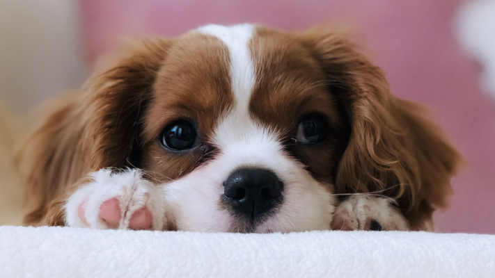 What Veterinary Services Does My Puppy Need?