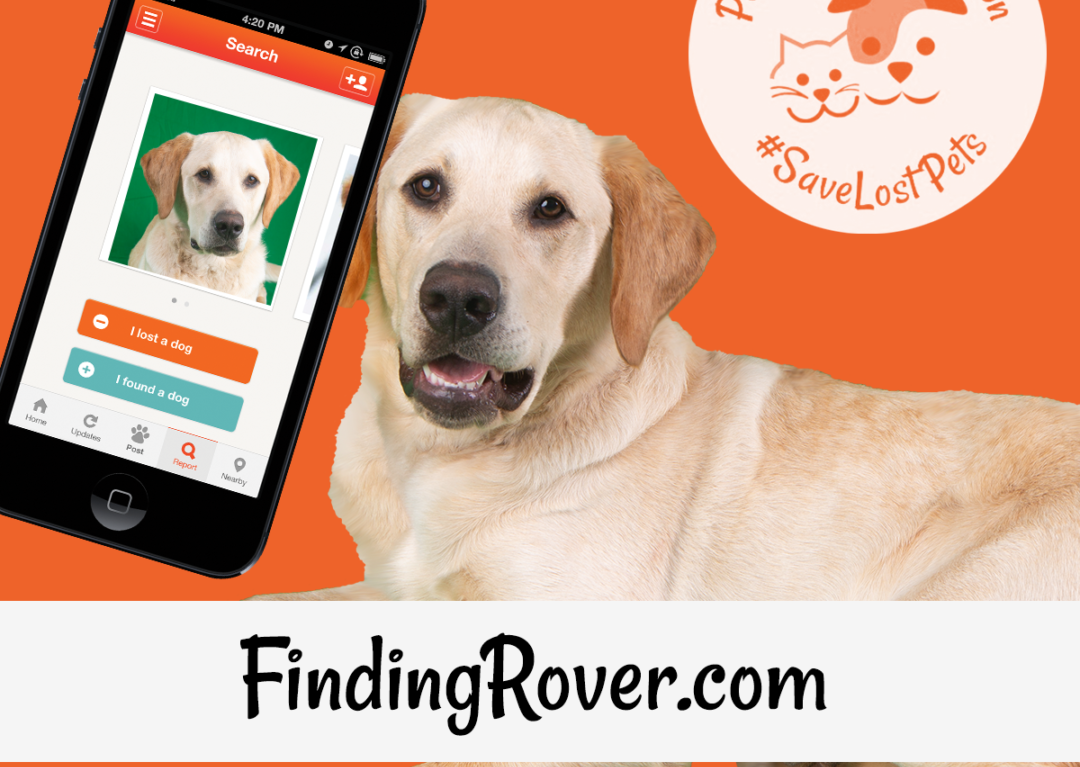 Facial Recognition to Reunite Lost Pets