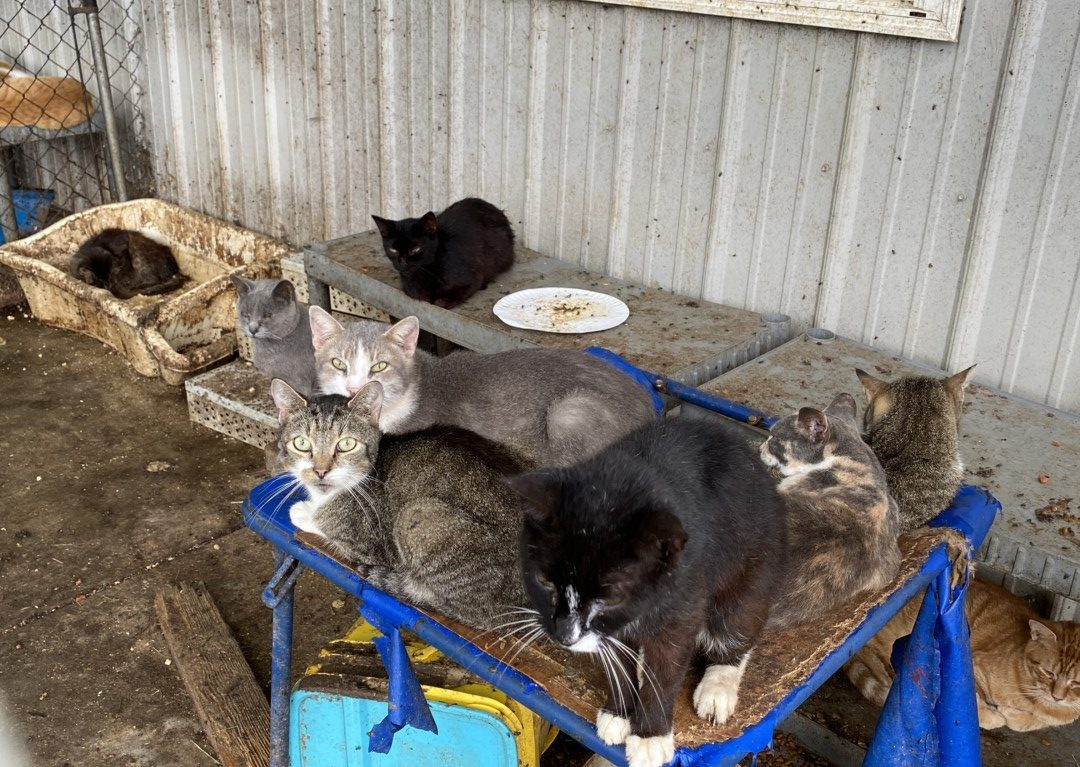 Intake of 182 Neglected Cats