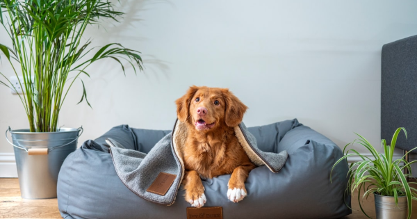 Do You Know if Your Dog or Cat Has Periodontal Disease?