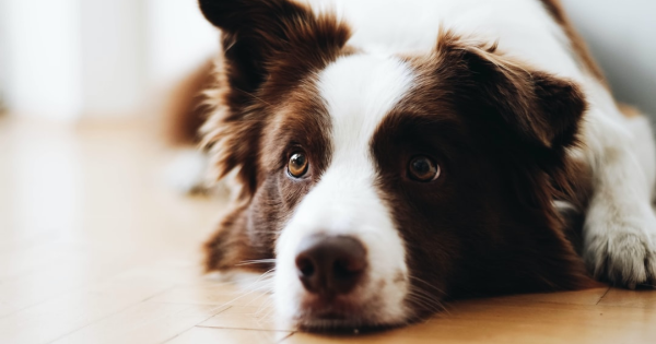 3 Things You Shouldn't Ignore When Choosing a Veterinarian